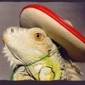 Mexican-Lizard