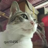 qazlll456